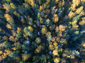 Canada, British Columbia, Indian Summer, forest from above - GNF01423