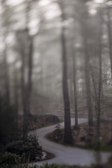 Empty winding road amidst trees in forest during foggy weather - CAVF63021