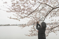 Rear view of woman photographing cherry blossom while standing by lake against sky at park - CAVF63144