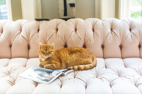 Ginger cat lying on stylish sofa - ISF21053