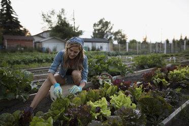 Woman tending to vegetable garden - HEROF28421