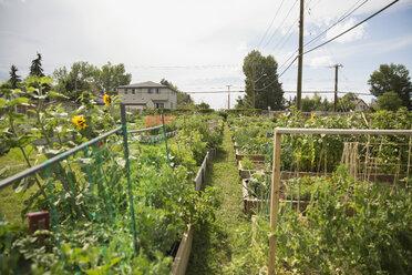 Sunny community vegetable garden - HEROF28424