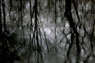 Reflection of bare trees on water surface at rainy day - JTF01191