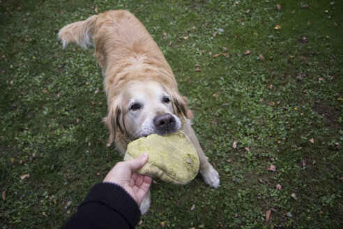 Dog owner playing with Golden Retriever - MAMF00476