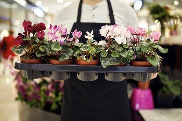 Close-up of florist holding tray of potted plants in flower shop - ZEDF02004