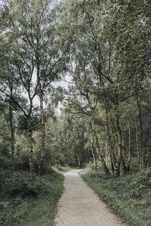 Netherlands, Schiermonnikoog, path through the forest - DWF00347
