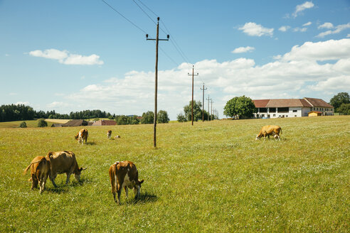 Austria, Upper Austria, Muehlviertel, cows on a pasture - AIF00631