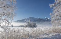 Germany, Upper Bavaria, Kochel, trees and shore grass covered with frost in winter - LHF00616