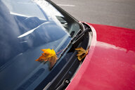 Leaf on Windshield of Red Car - MINF10621