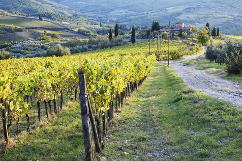 Vineyards and Farmhouse - MINF10633