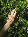 Cropped hand of woman touching plants at park - CAVF63217