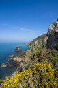 United Kingdom, Channel islands, blooming gorse over the east coast of Sark - RUNF01525
