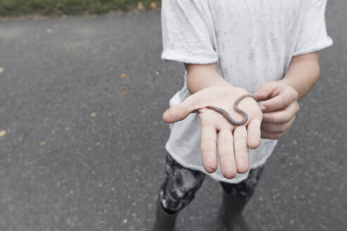 Boy showing earthworm on his palm, close-up - EYAF00022