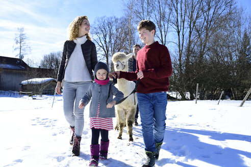 Family walking with alpaca on a field in winter - ECPF00559