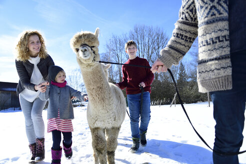 Family walking with alpaca on a field in winter - ECPF00562