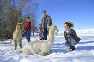 Family with alpacas on a field in winter - ECPF00568