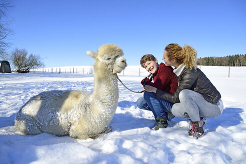 Mother and son on a field with alpaca in winter - ECPF00571
