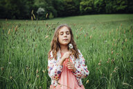 Portrait of girl with blowball on a meadow - ANHF00097