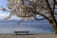Italy, Piedmont, Lake Maggiore, Verbania, Pallanza, bench at waterfront promenade - LBF02460