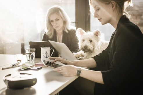 Colleagues sitting at desk, working, little dog watching - MJRF00097