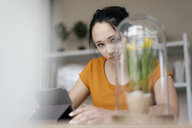 Young woman with tablet at table looking at plant under glass - KNSF05725