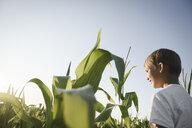 Boy in a cornfield under blue sky - EYAF00051