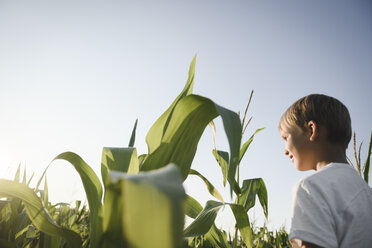 Boy in a cornfield under blue sky - EYAF00051