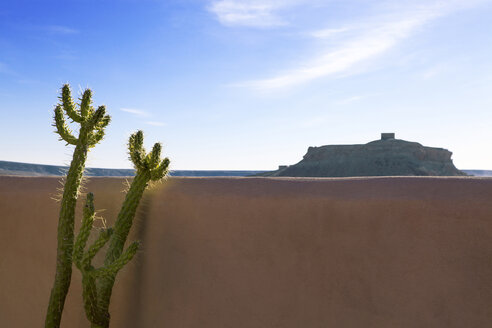 Morocco, Ait-Ben-Haddou, succulent plant in front of loam wall - PSTF00386