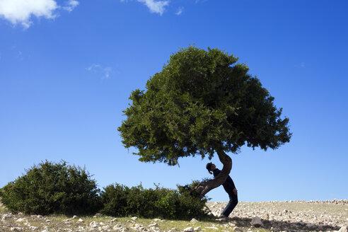 Morocco, Sidi Kaouki, man wearing a bowler hat standing crooked at a tree - PSTF00422