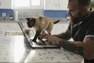 Cat crawling on man's laptop in kitchen - HEROF31078