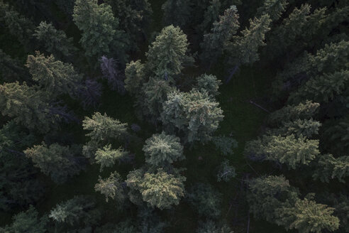 Overhead view tall green forest treetops - HEROF31283