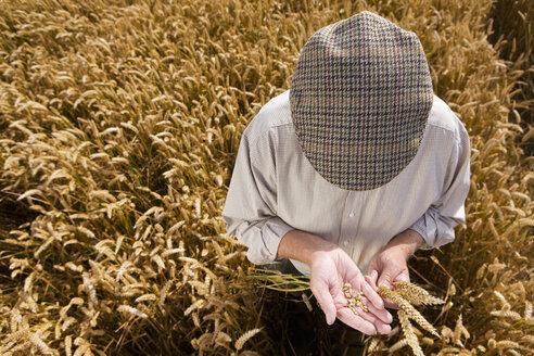 Farmer examining wheat - JUIF00435