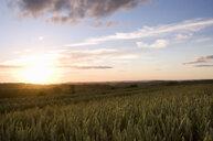 Sun setting on wheat fields - JUIF00444