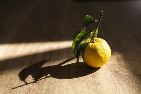 Lemon and shadow on wood - GIOF05883
