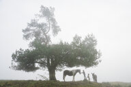 Girl with dog, donkey and horse under rural tree in foggy field - FSIF03827