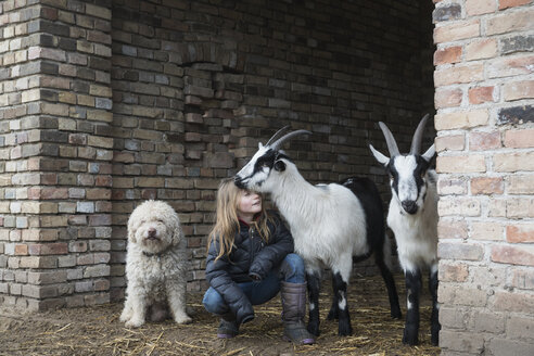 Girl with goats and dog in barn doorway - FSIF03833