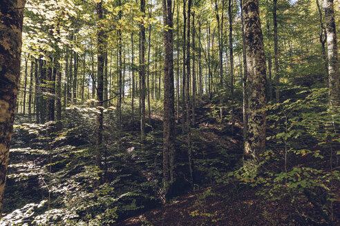 Spain, Navarra, Irati Forest, lush forest - RSGF00133
