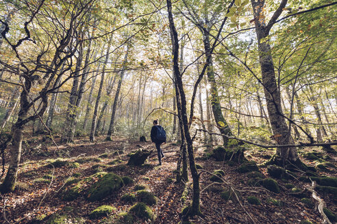 Spain, Navarra, Irati Forest, young woman walking in lush forest - RSGF00136