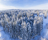 Germany, Bavaria, aerial view over snowy spruce forest near Geretsried - SIEF08475