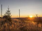Germany, Bavaria, Bavarian Forest, sunrise at Lackenberg near Bayerisch Eisenstein - HUSF00031