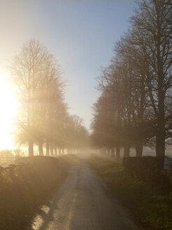 Foggy country lane at sunrise - JUIF00793