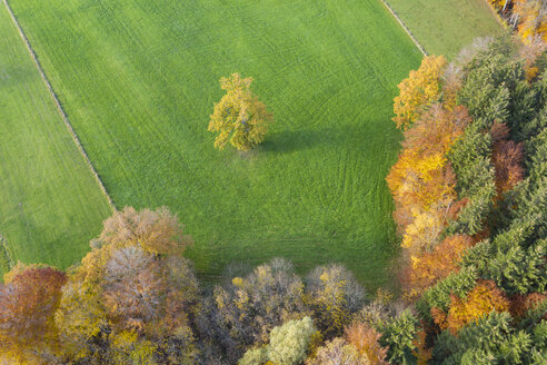 Germany, Bavaria, autumnal forest edge and meadow near Icking, aerial view - SIEF08529