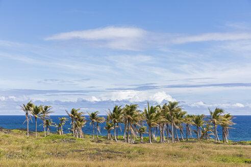 USA, Hawaii, Big Island, Volcanoes National Park, palm grove at the coast - FOF10533