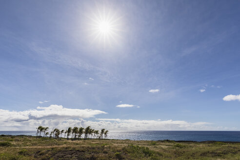 USA, Hawaii, Big Island, Volcanoes National Park, palm grove at the coast - FOF10545