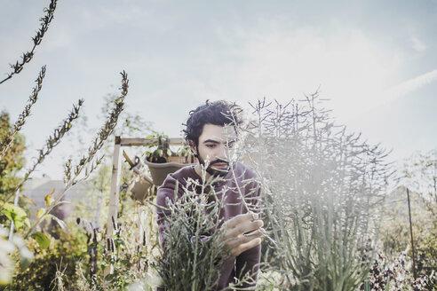 Man in urban garden examining plant - VGPF00001