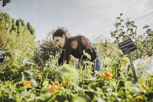 Woman gardening in urban garden - VGPF00010