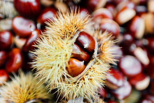 Chestnuts, some in prickly casing - CUF50036