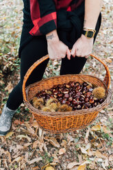 Woman collecting chestnuts in basket - CUF50039