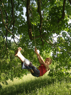 Boy swinging on a rope in tree - WWF05038