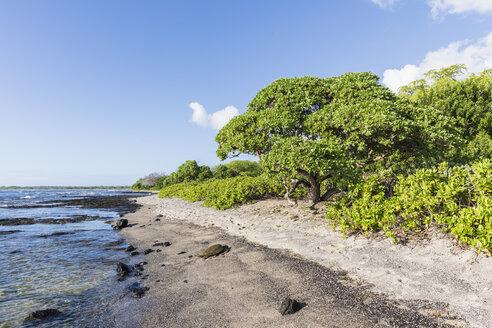 USA, Hawaii, Big Island, Green Sea Turtle on beach at Honokohau Small Boat Harbor - FOF10573